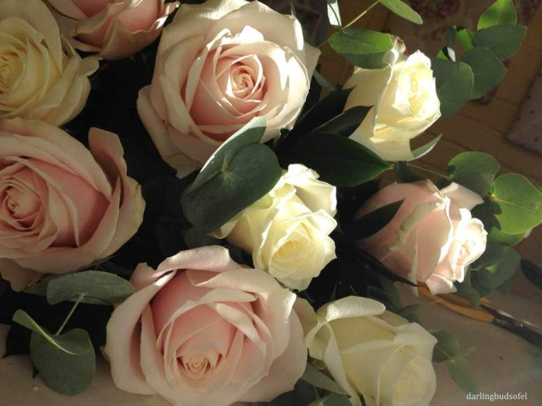 avalance-roses-3